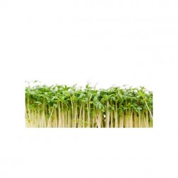 Semena na klíčky ŘEŘICHA 30g
