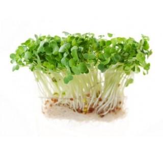 https://www.biododomu.cz/5373-thickbox/semena-na-klicky-horcice-bila-30g-.jpg