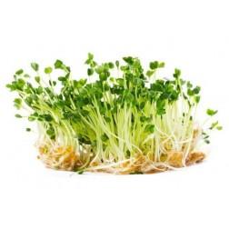 Semena na klíčky RUKOLA 10g